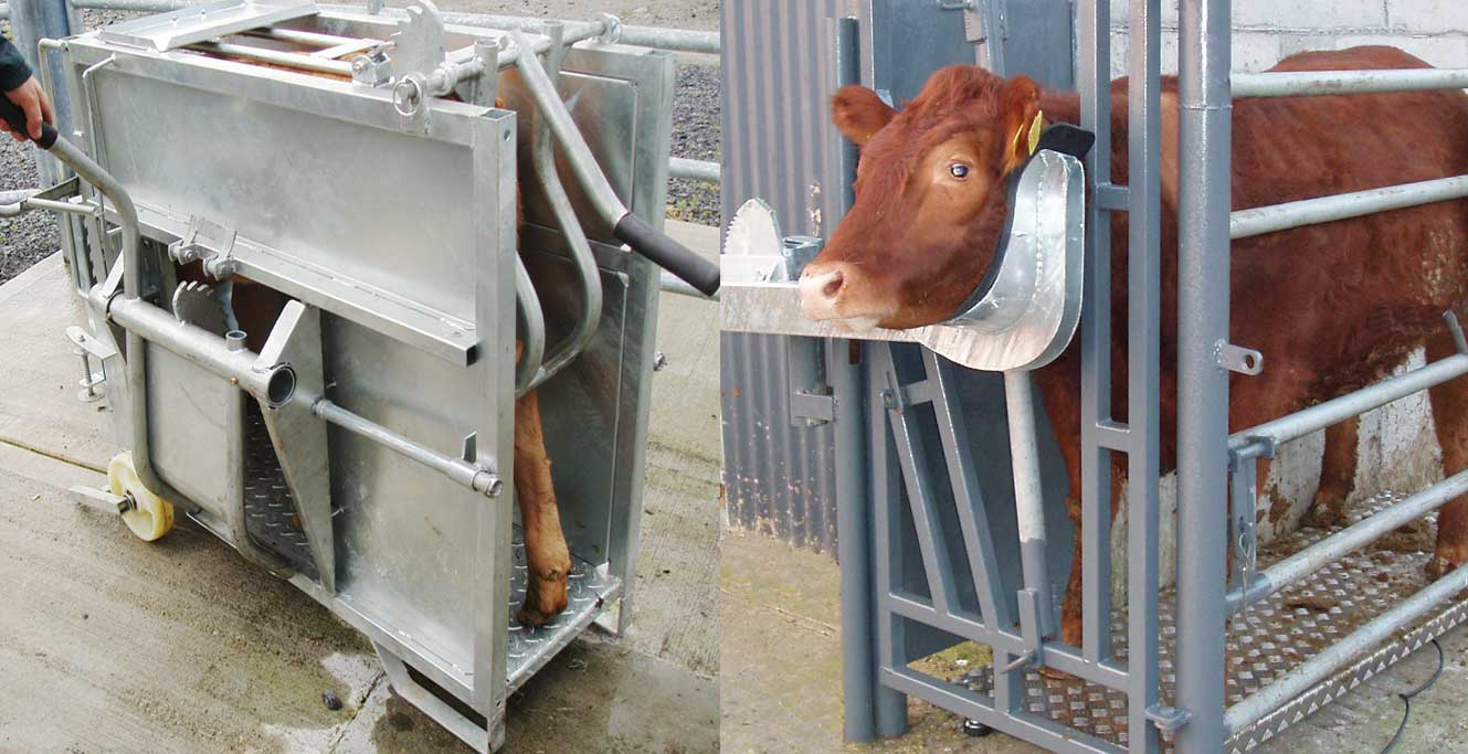 Labour Saving Cattle Handling Equipment